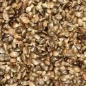 Graines de chanvre (chènevis)