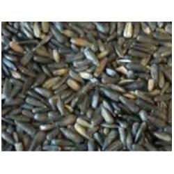 Tournesol Noir Micro 1kg ornitalia