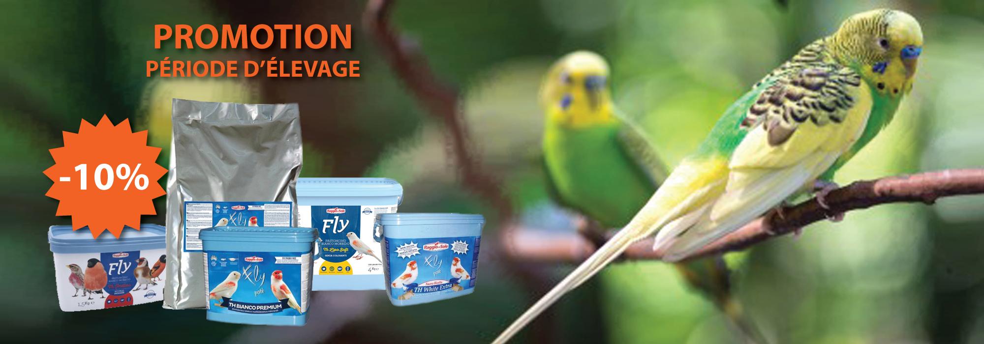 promotion pour oiseaux